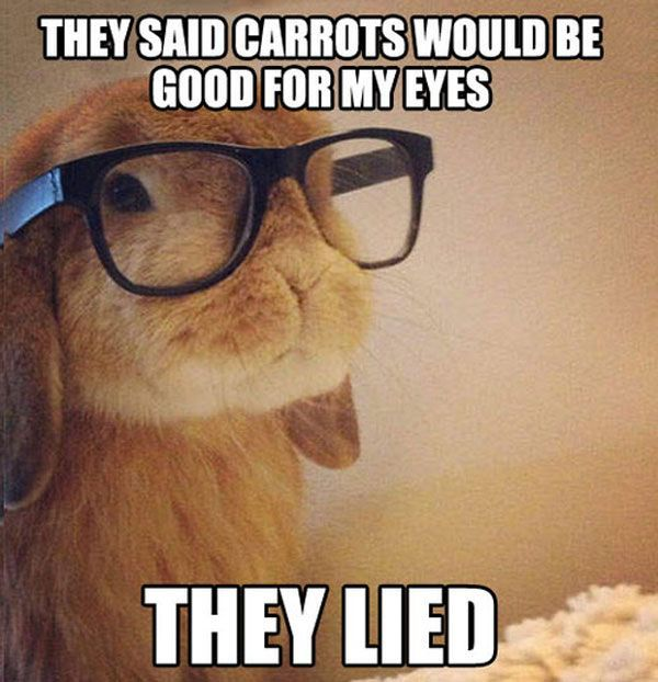 Most Funny Quotes Lols 25 Best Funny Animal Quotes And Funny